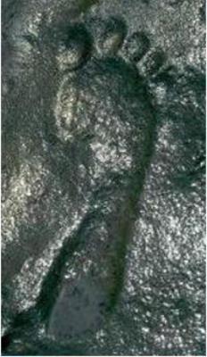 Отпечаток стопы, которому около 290 миллионов лет